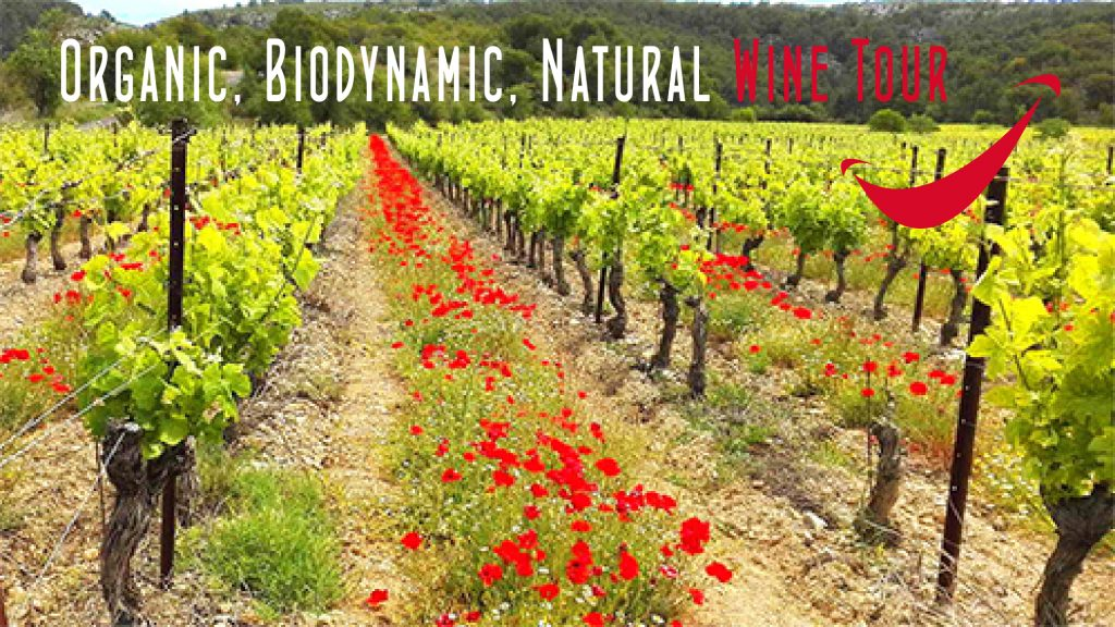 Organic, Biodynamic and Natural wine tour